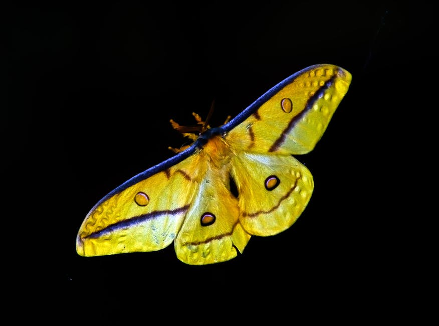Yellow and blue butterfly