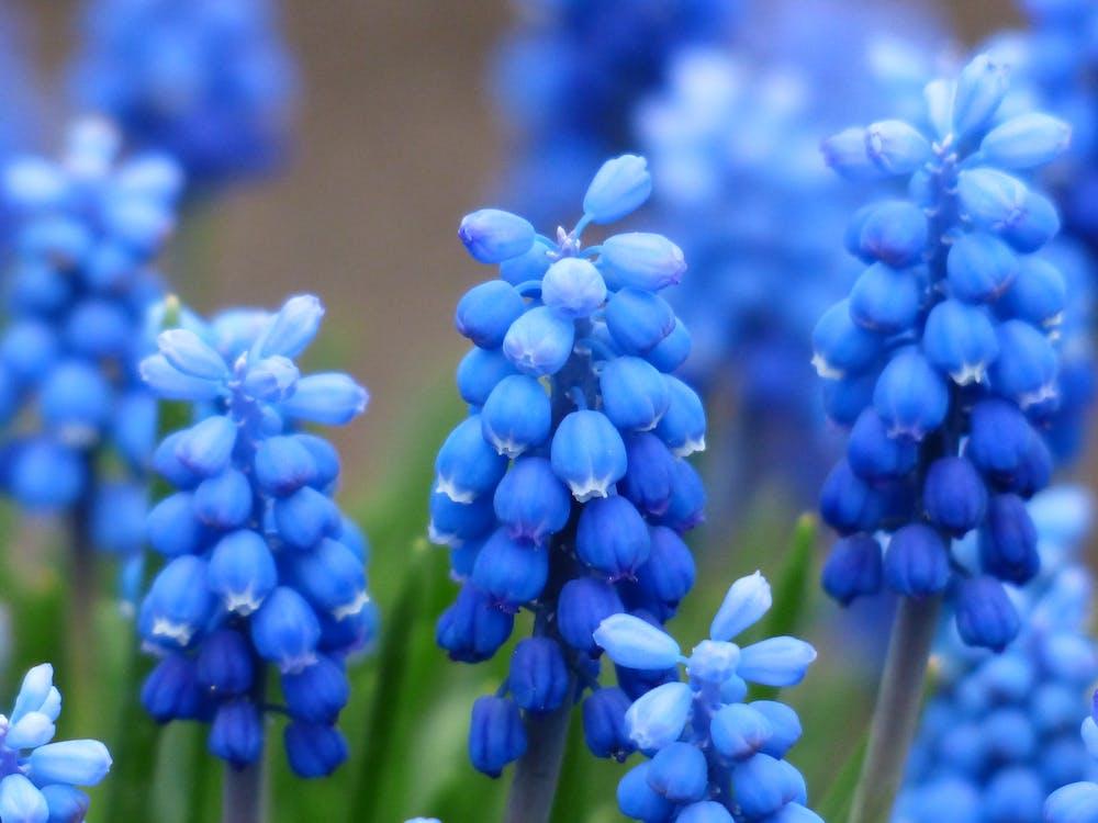 Ingyenes stockfotó gyár, kék, növény témában