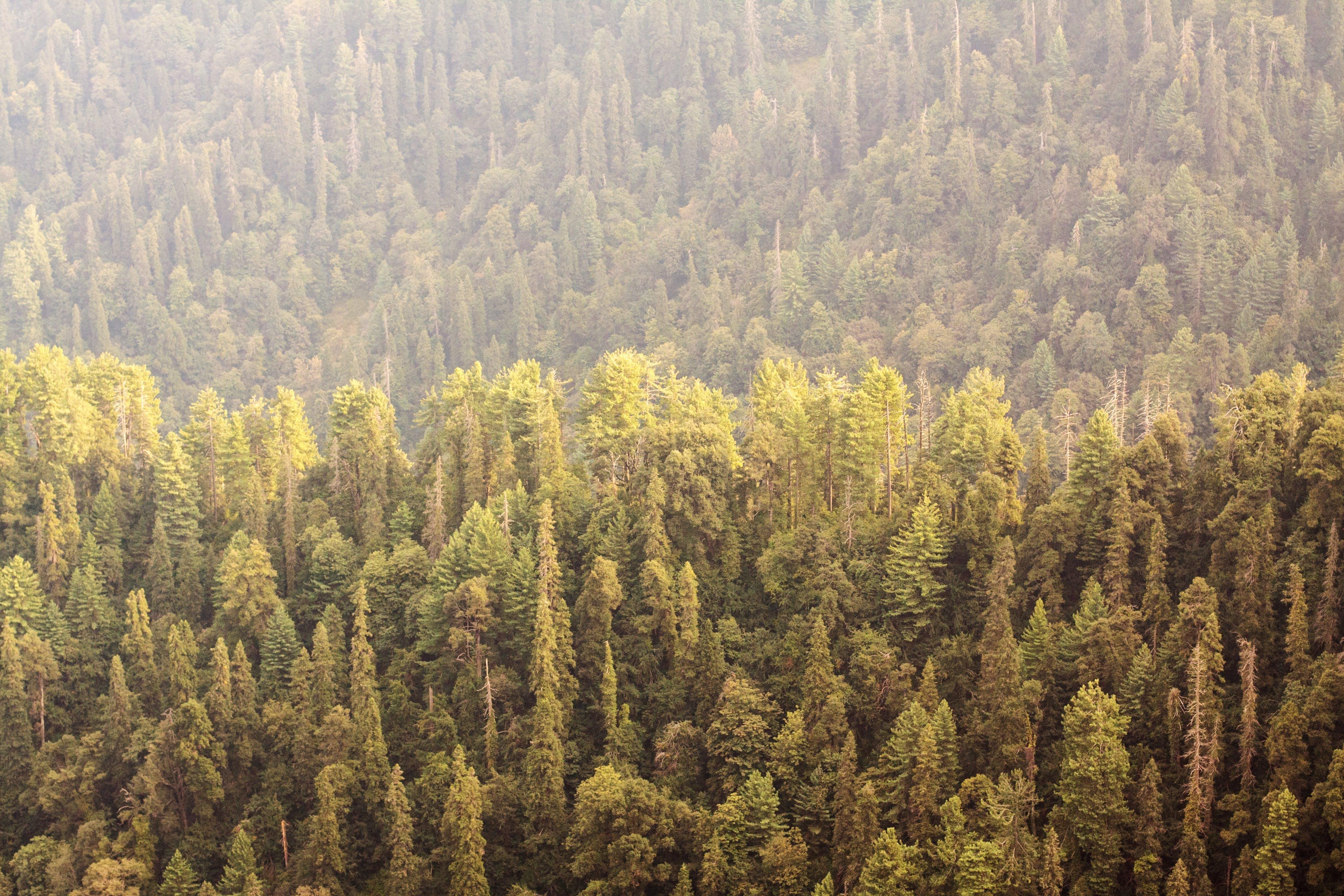 Kostenloses Stock Foto zu landschaft, berge, wald, bäume