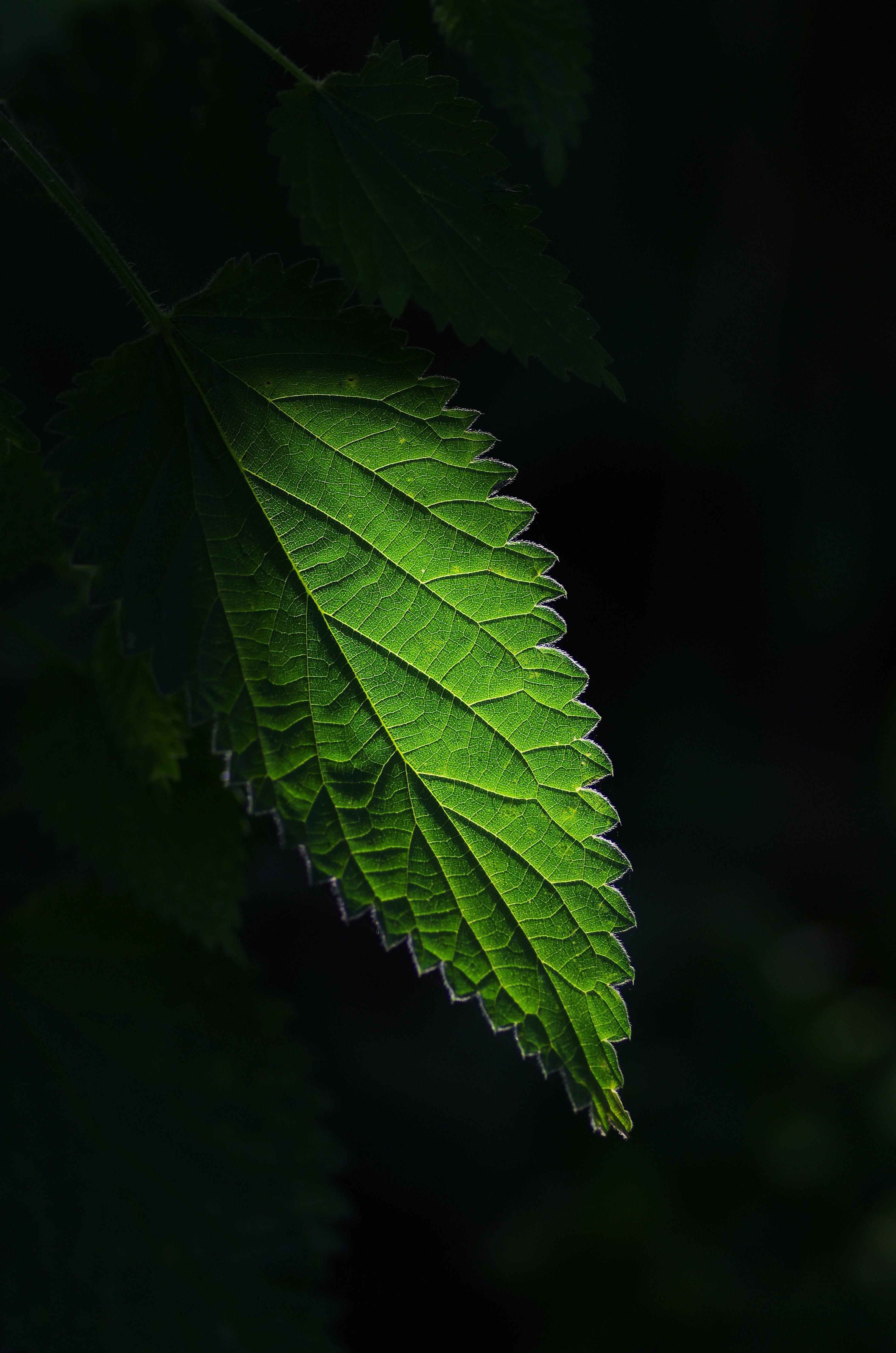 Ảnh lưu trữ miễn phí về màu xanh lá, Thiên nhiên, thực vật