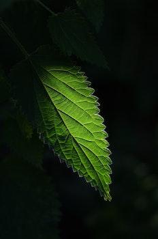 Green Leaved Plants