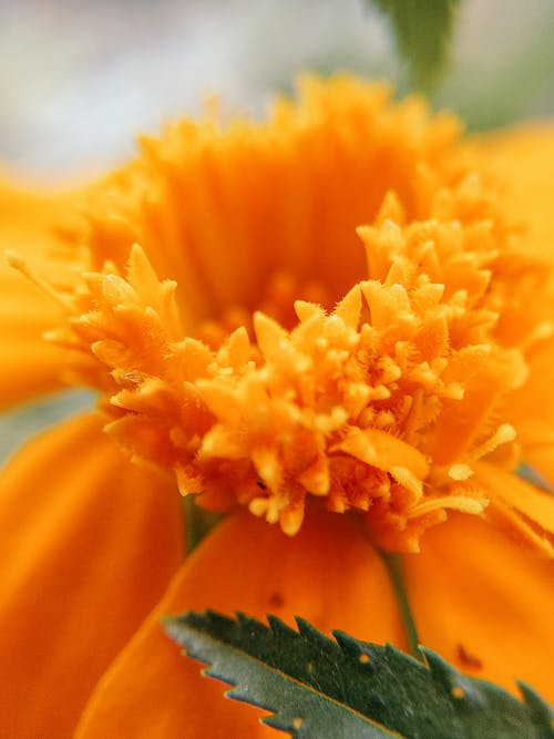 Macro Photography of a Yellow Flower