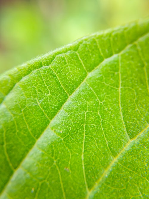 Macro Photography of a Green Leaf