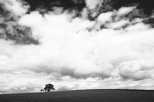 Tree on Field Under Clouds in Grayscale