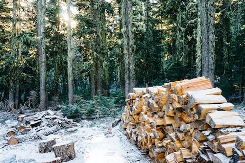 나무, 눈, 더미, 목재의 무료 스톡 사진