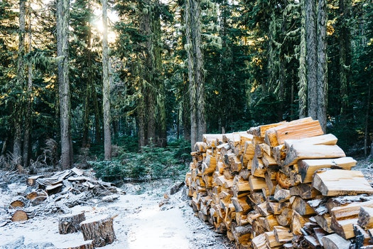 Free stock photo of snow, wood, forest, firewood