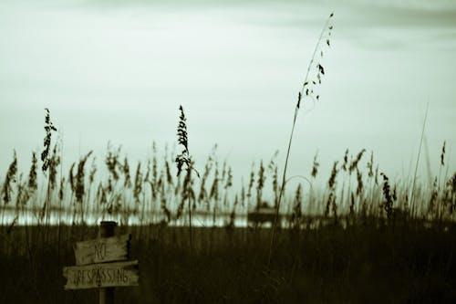 Grassy field near water in countryside