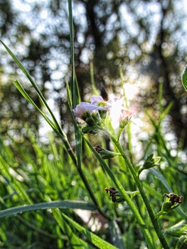 Free stock photo of grass, plant, flower, green