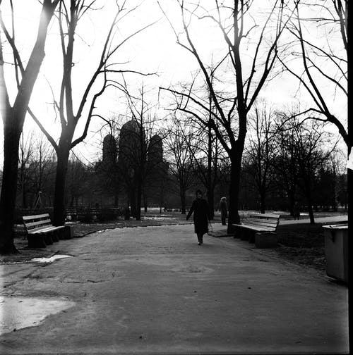 Anonymous woman walking in leafless park