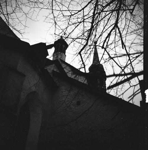 Old castle near leafless tree in city