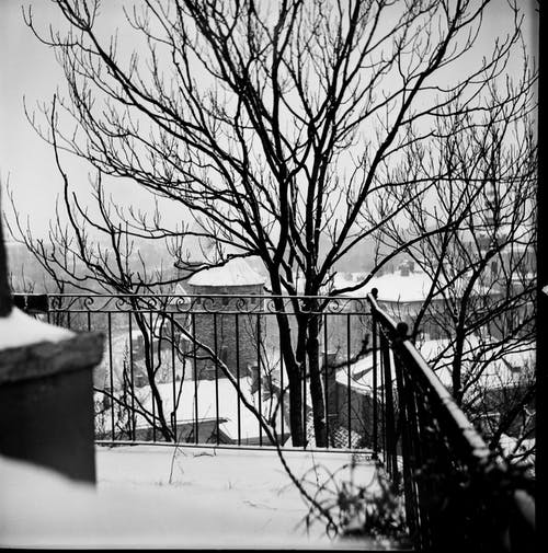 Black and white of snowy balcony with metal fence in front of leafless trees and classic urban buildings