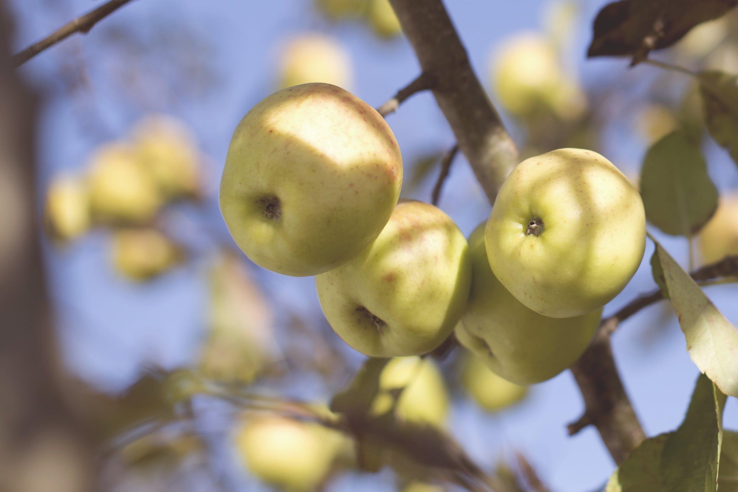 Green Round Fruit During Daytime