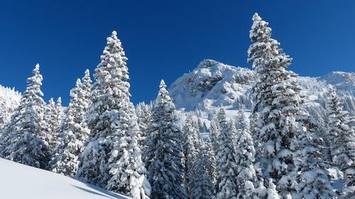 Fotos de stock gratuitas de arboles, cielo, cubierto de nieve, frío