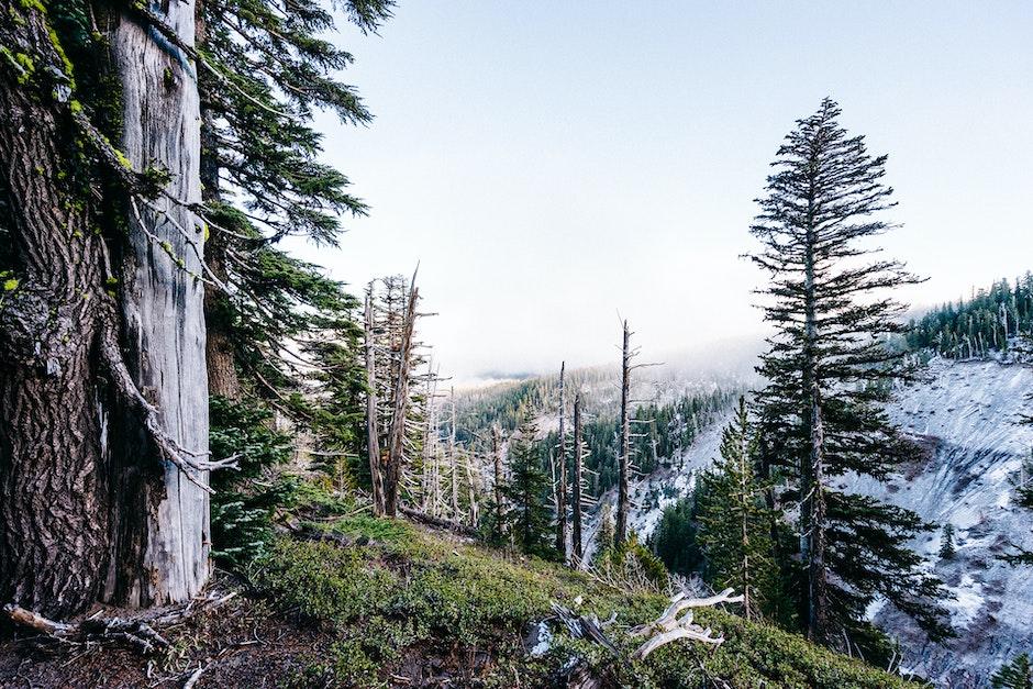 cliff, trees
