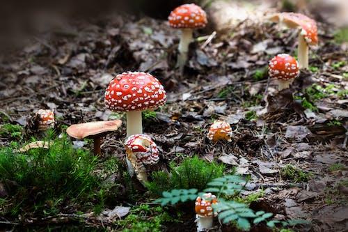 doğa, mantarlar, yosun, zehirli şapkalı mantarlar içeren Ücretsiz stok fotoğraf