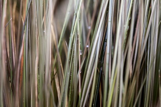 Free stock photo of grass, raindrops, wet, cables