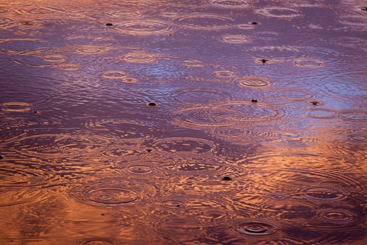 Free stock photo of water, photography, raindrops, wet