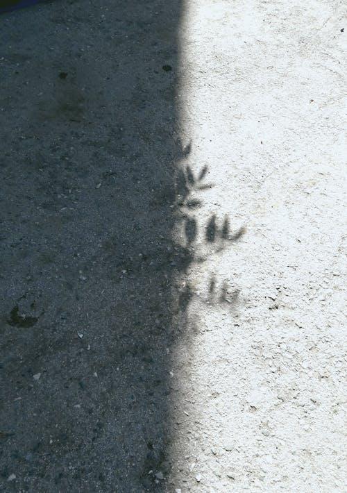 beton, boş, bozulmak içeren Ücretsiz stok fotoğraf