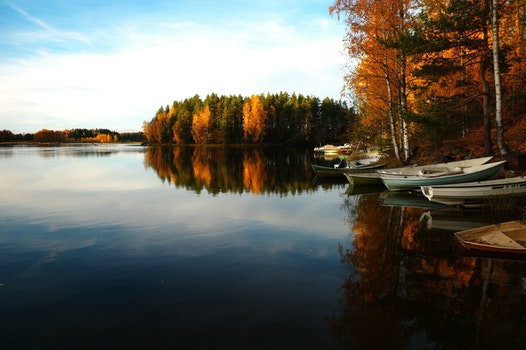 Free stock photo of water, boats, forest, trees