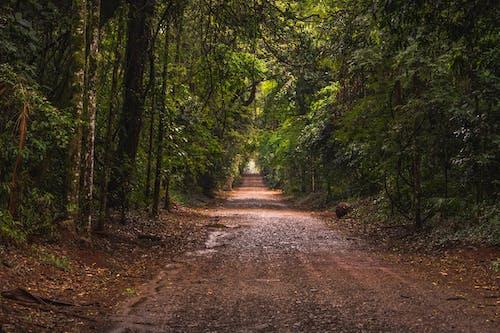 Brown Dirt Road in Between Green Trees