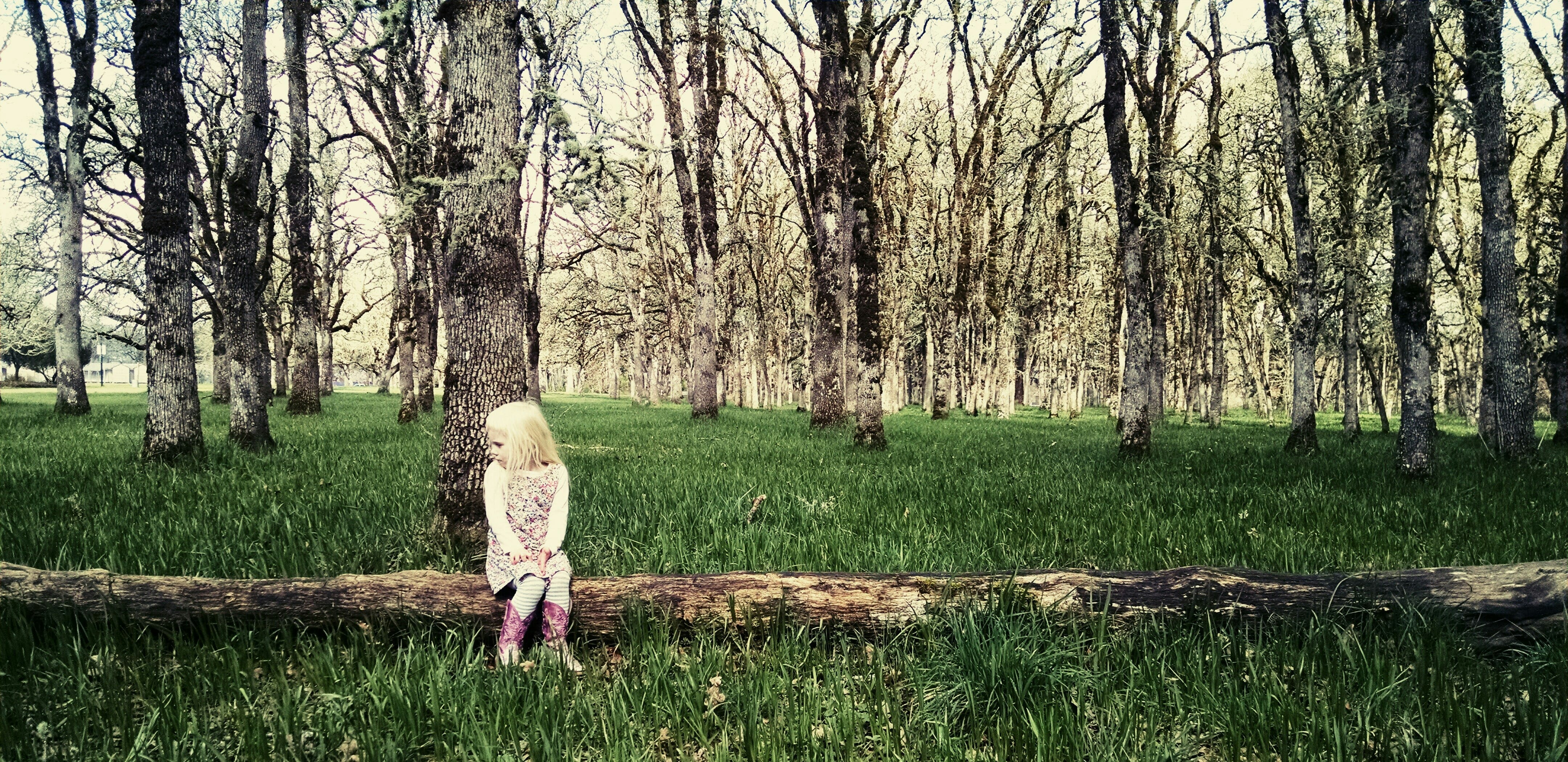 Free stock photo of nature, person, girl, forest