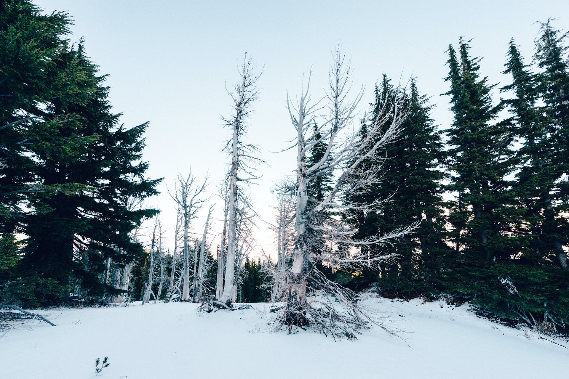 Bare Tree on Snow Covered Hill during Golden Hour