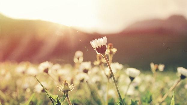 Free stock photo of flowers, summer, sun, sunshine