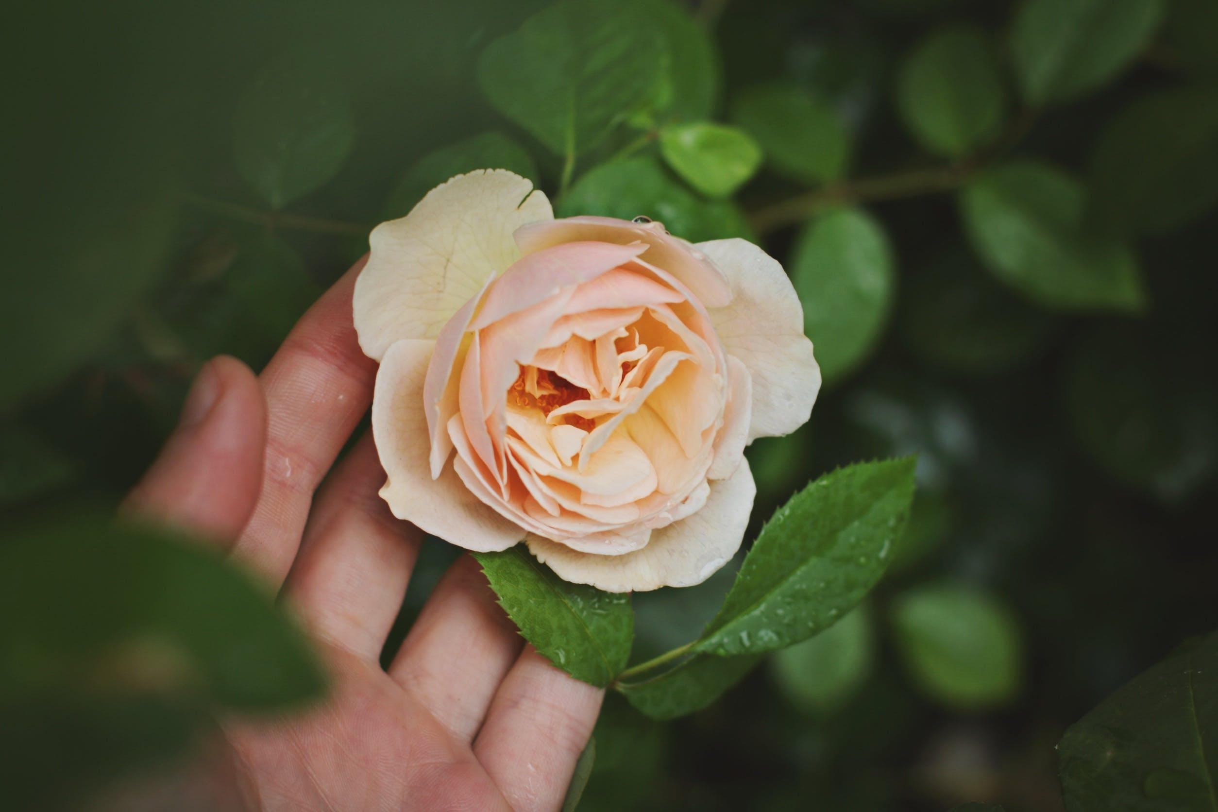 Free stock photo of nature, love, hand, garden