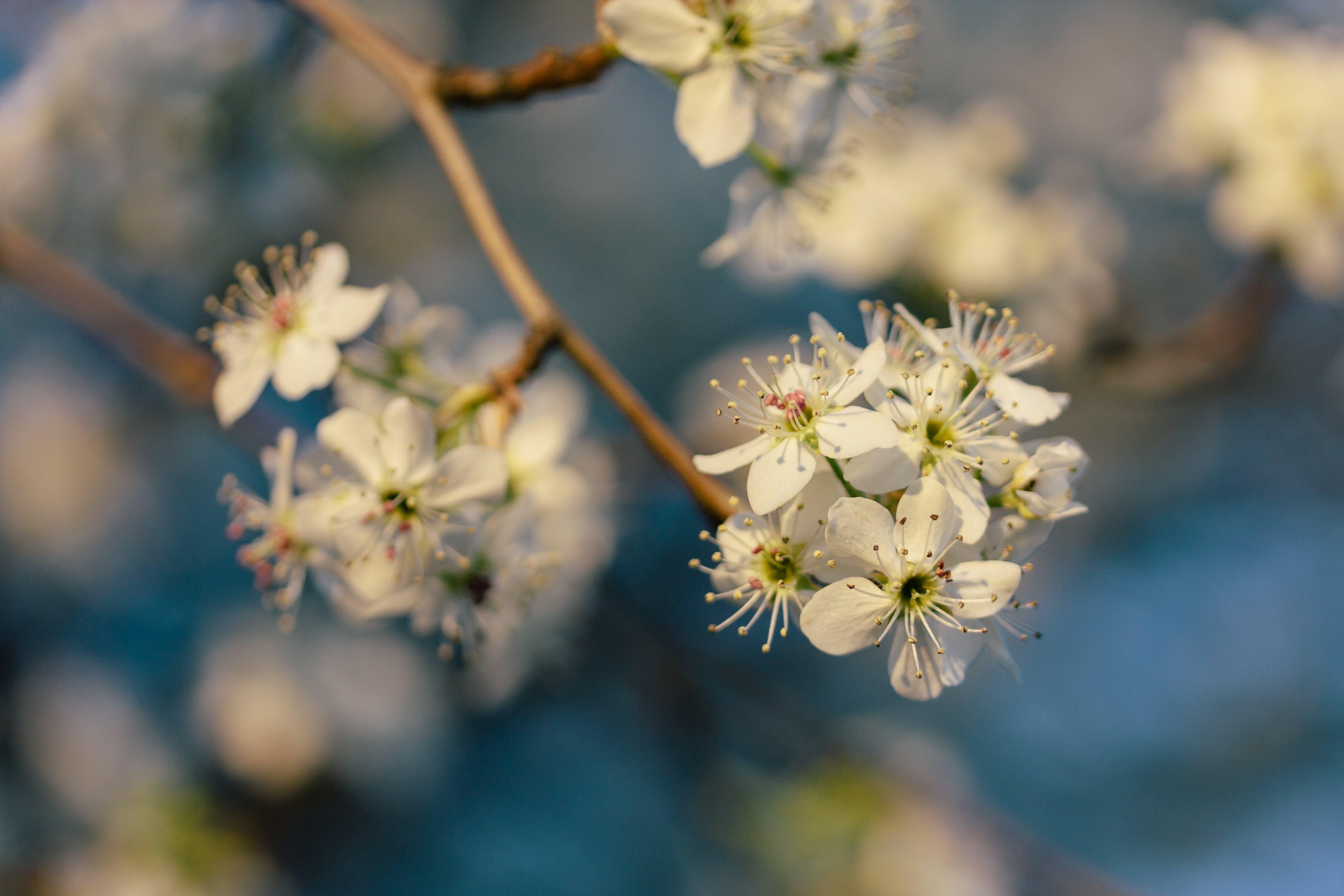 Free stock photo of flowers, white, macro, bloom