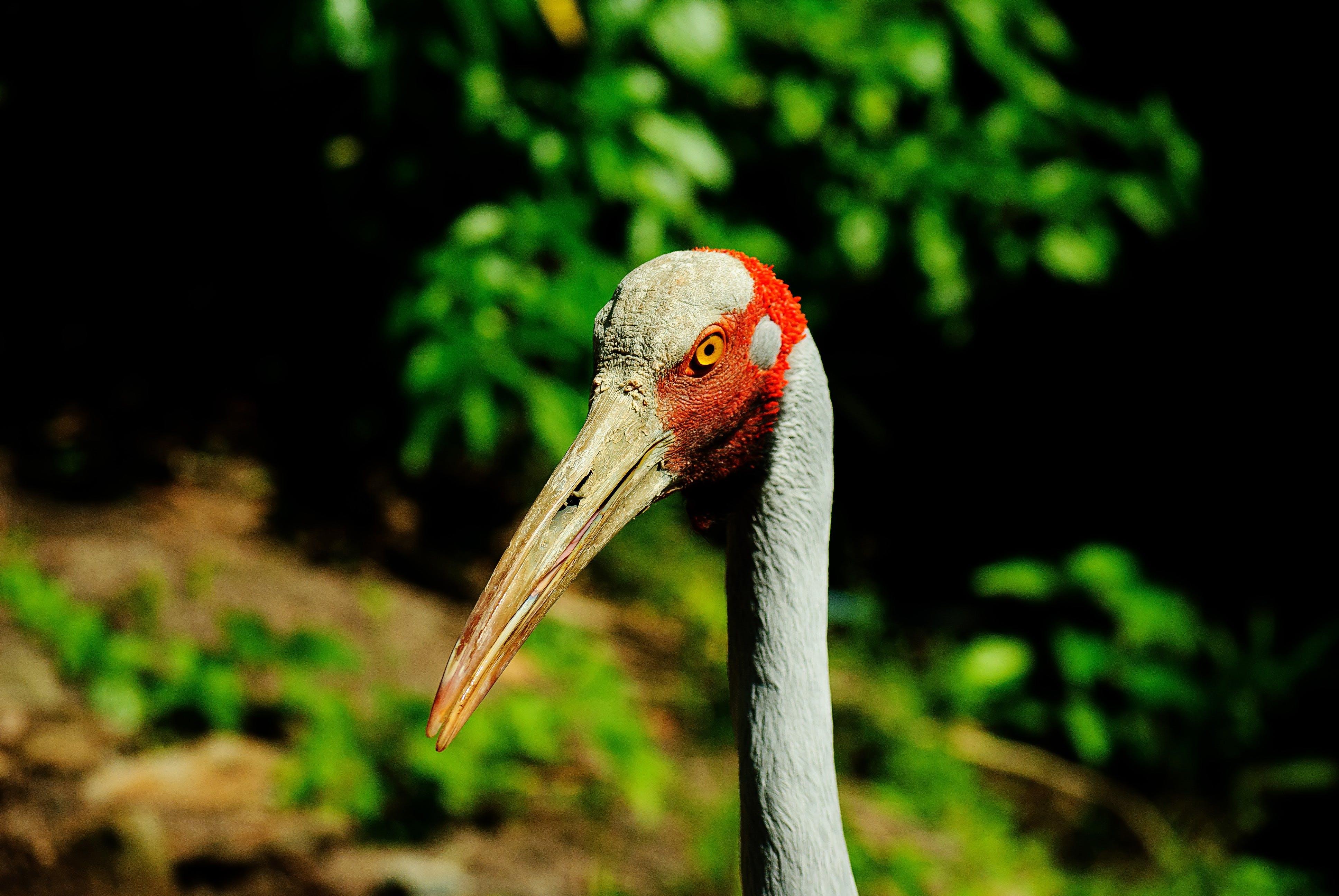 Gray Red Bird Near Trees
