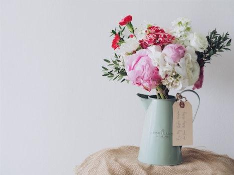 Free stock photo of flowers, gift, flowerpot