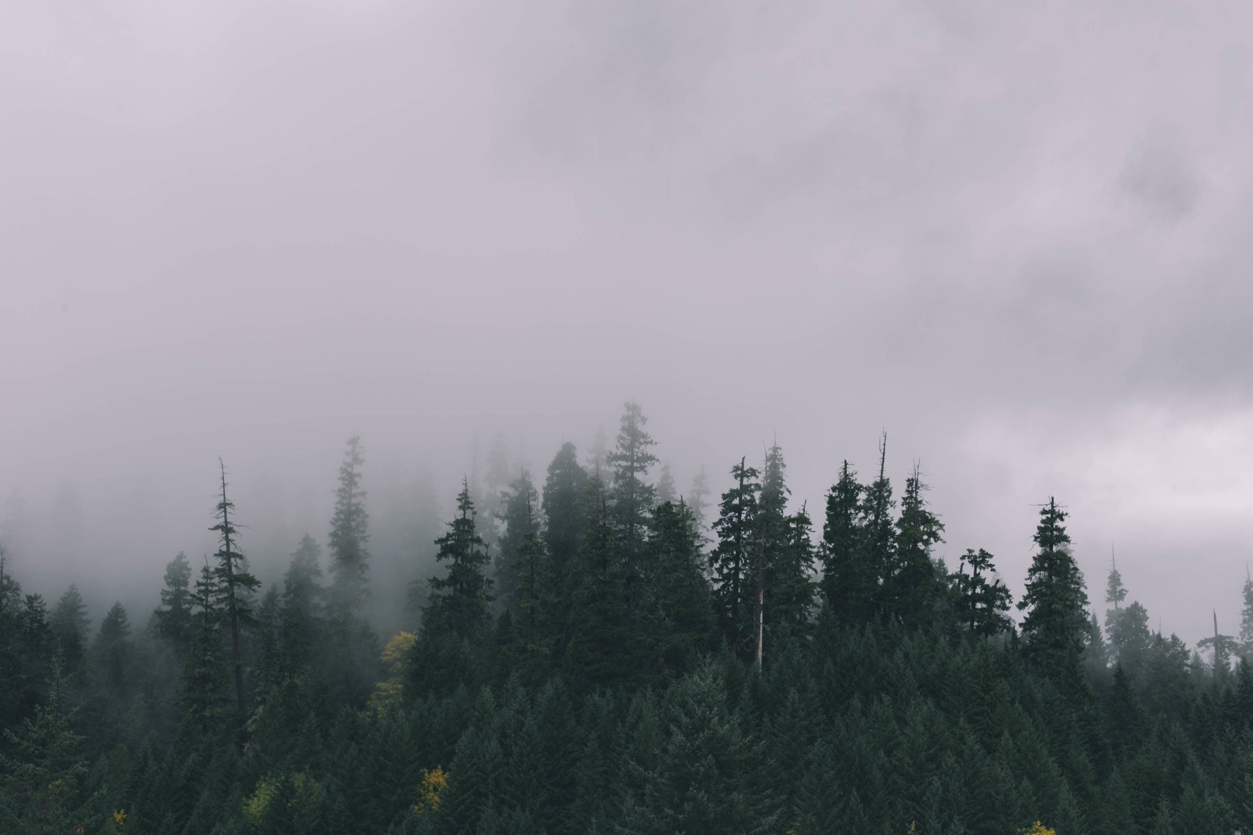 Free stock photo of nature, cloudy, forest, trees