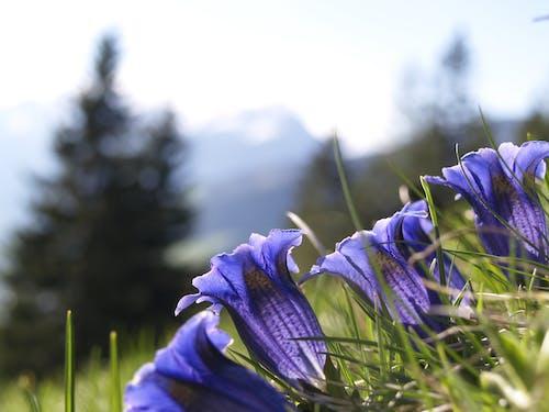 Foto stok gratis alam, berkembang, bidang, bunga lonceng