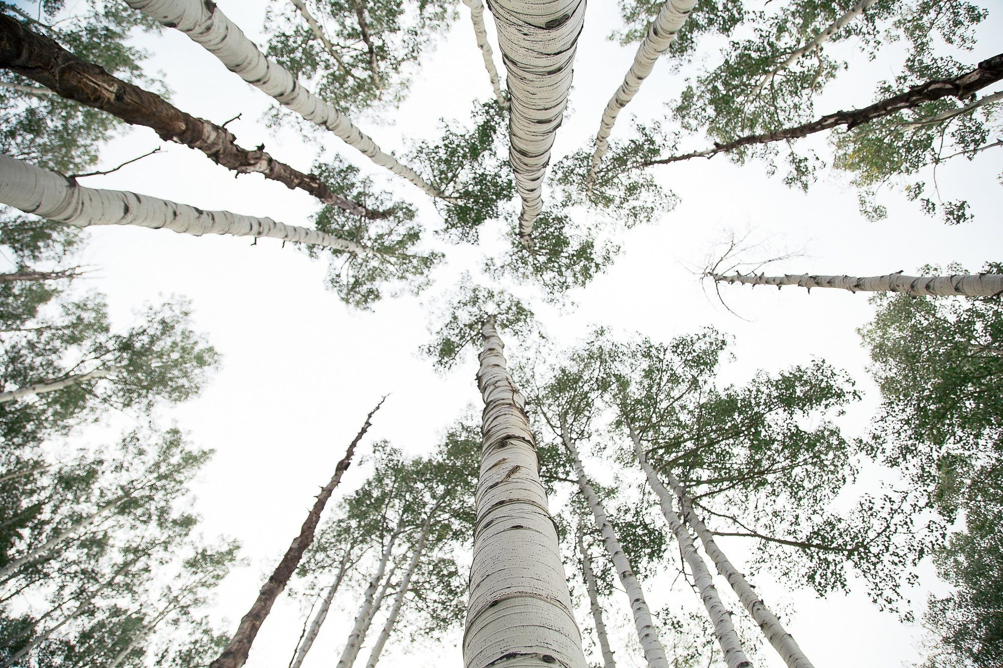 Free stock photo of sky, forest, trees, leaves