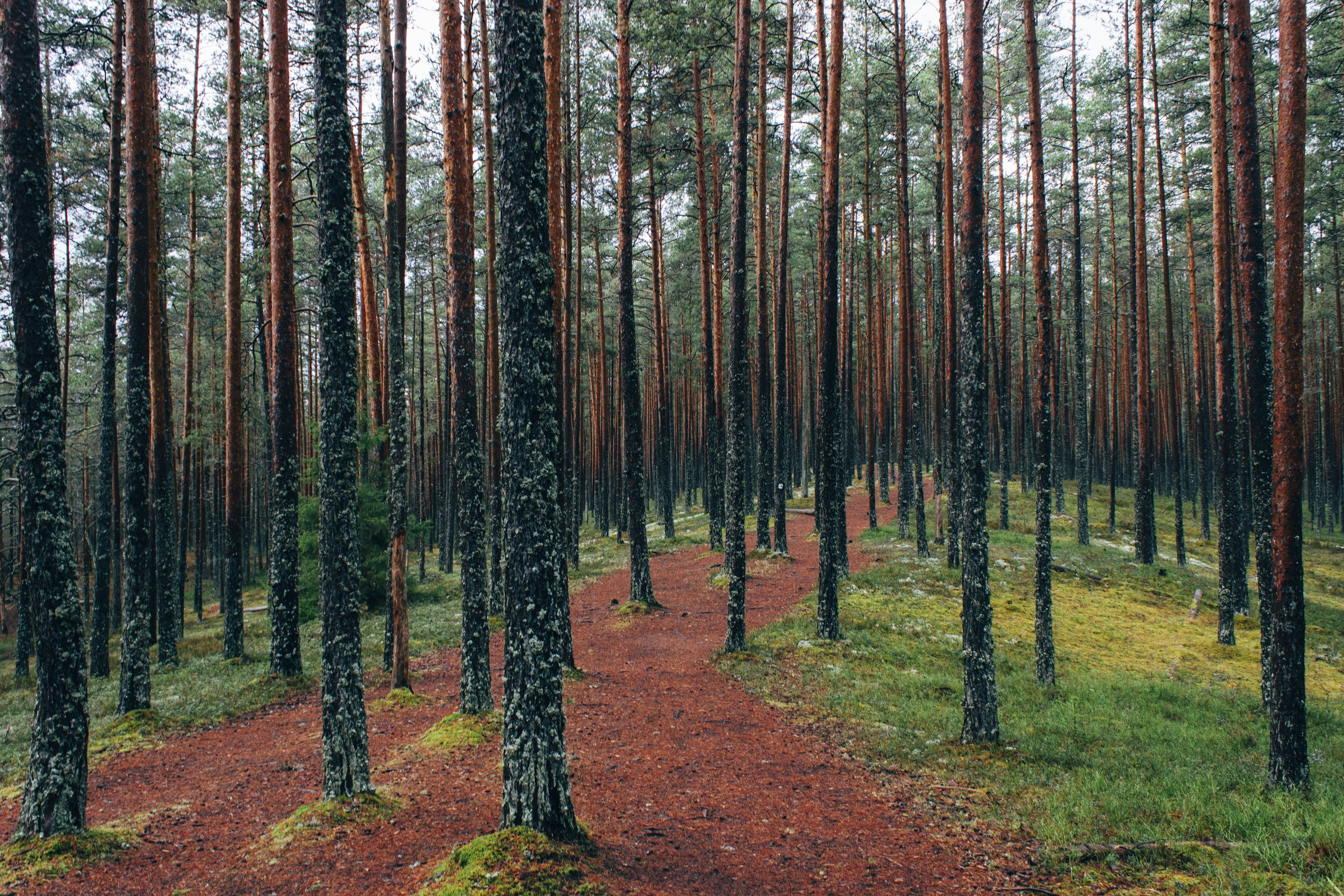 Free stock photo of nature, forest, trees, outdoors