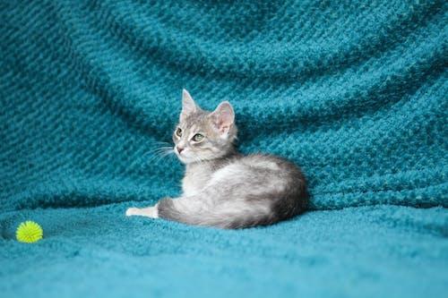 Free stock photo of Animals And Pets, hello kitty, kitten