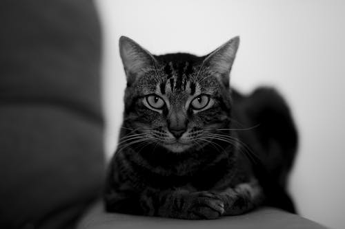 Adorable cat with attentive gaze at home