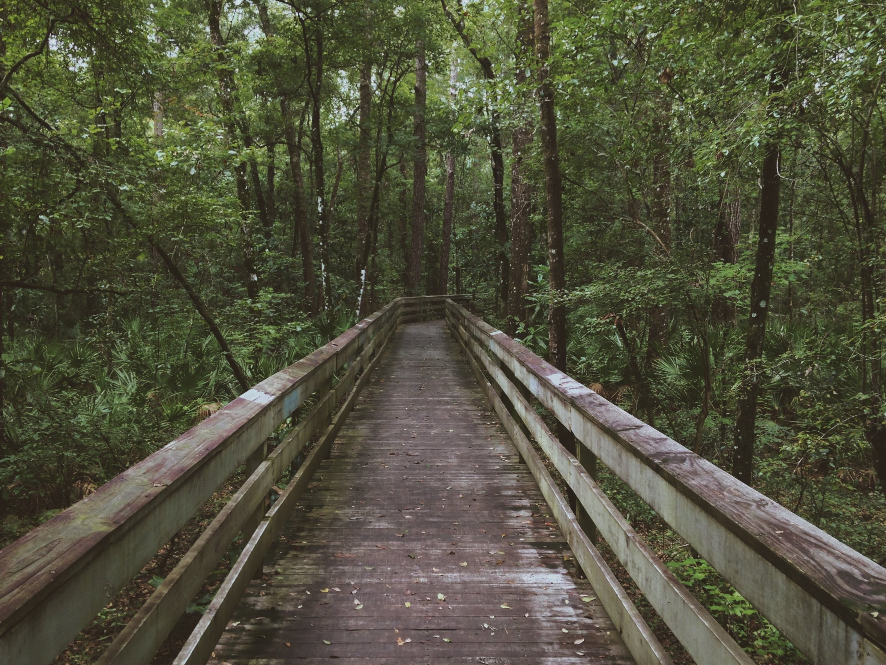 Free stock photo of boardwalk, environment, footpath, forest