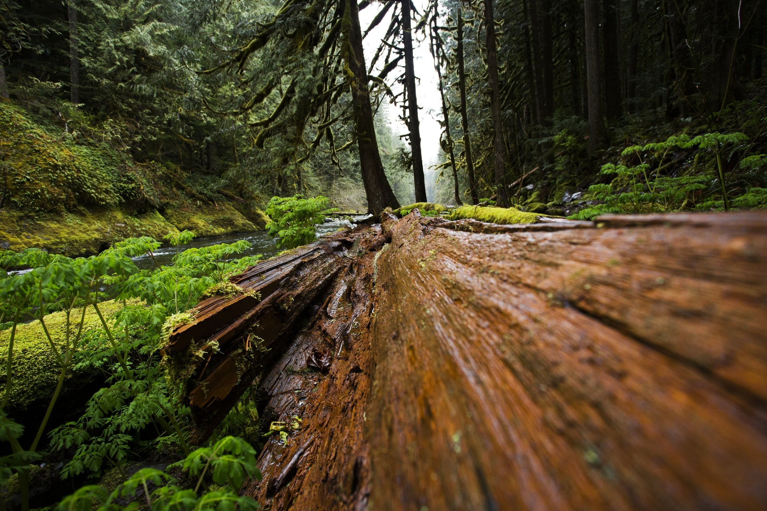Free stock photo of brown, ecology, fallen, forest