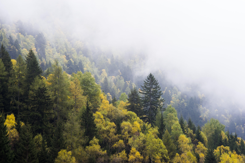 Foto d'estoc gratuïta de amb boira, arbres, boira, bosc