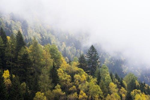 ağaçlar, dağ, doğa, manzara içeren Ücretsiz stok fotoğraf