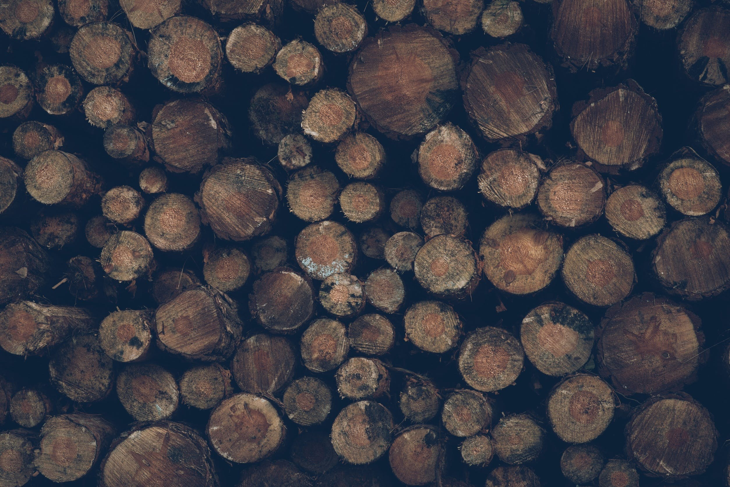 Free stock photo of wood, nature, forest, firewood