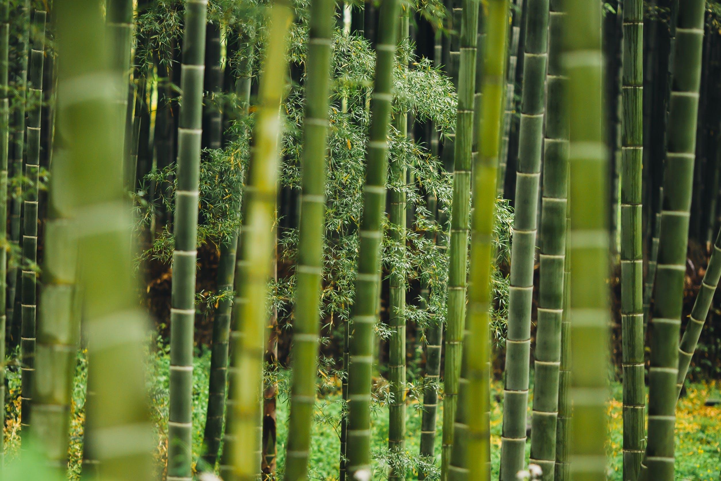 Free stock photo of bamboo, botanical, bright, close-up