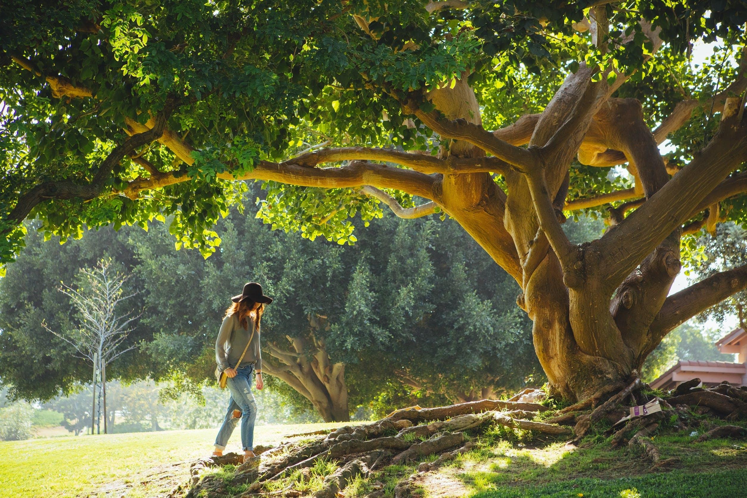 Foto stok gratis akar, alam, berjalan, kaum wanita