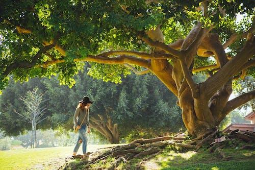 ağaç, çevre, doğa, Kadın içeren Ücretsiz stok fotoğraf