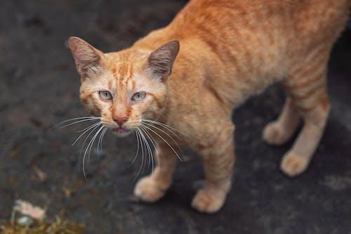 Orange Tabby Cat on Black Soil