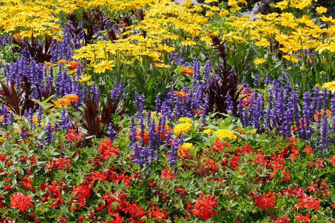Red, Purple and Yellow Flower Field