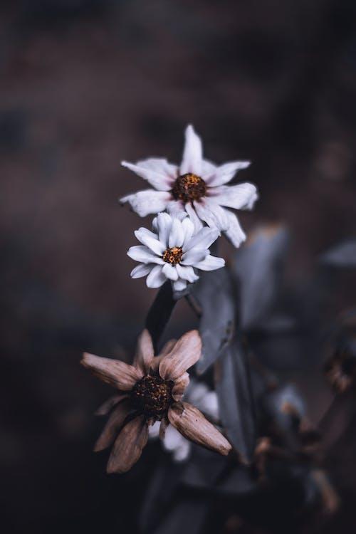 คลังภาพถ่ายฟรี ของ กลางแจ้ง, กลีบดอก, กลีบดอกไม้, การเจริญเติบโต