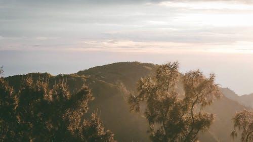 Foto profissional grátis de árvores, cênico, enevoado, montanha