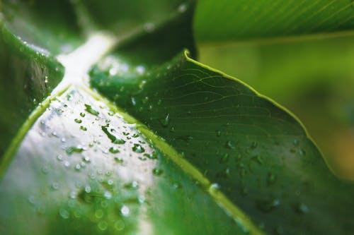 Foto stok gratis hijau, hujan, kilang, pohon